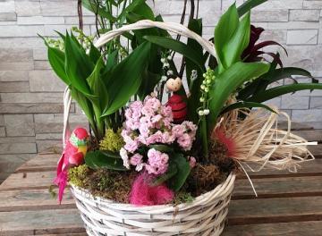 Jardin de muguet et de plantes